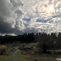 Ananda Laurelwood Van Gogh Clouds